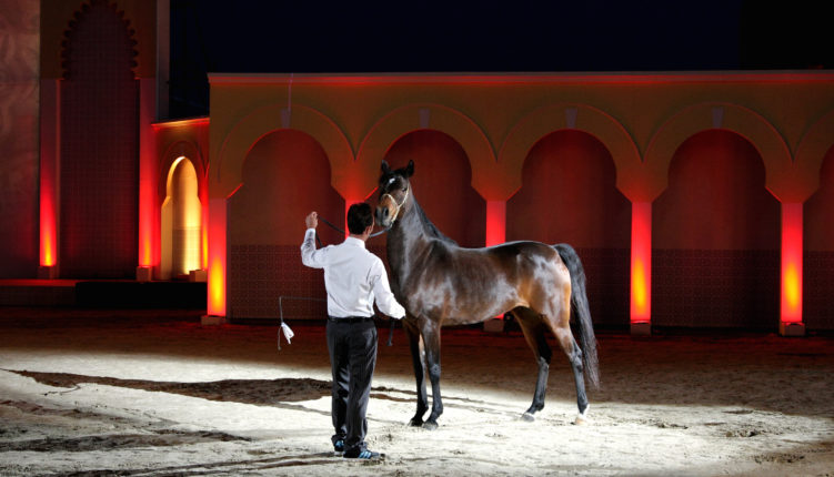 Heste Show Rincon Rent